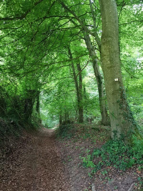Der Kaiserstuhlpfad geht in den dunklen Wald