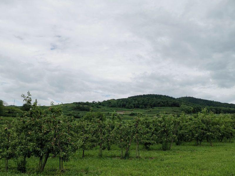Obstplantage Schambachtal