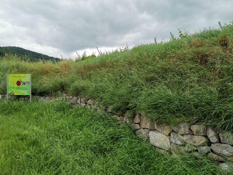 Trockenmauer für Eidechsen und Co. auf dem Schambachtal-Erlebnispfad