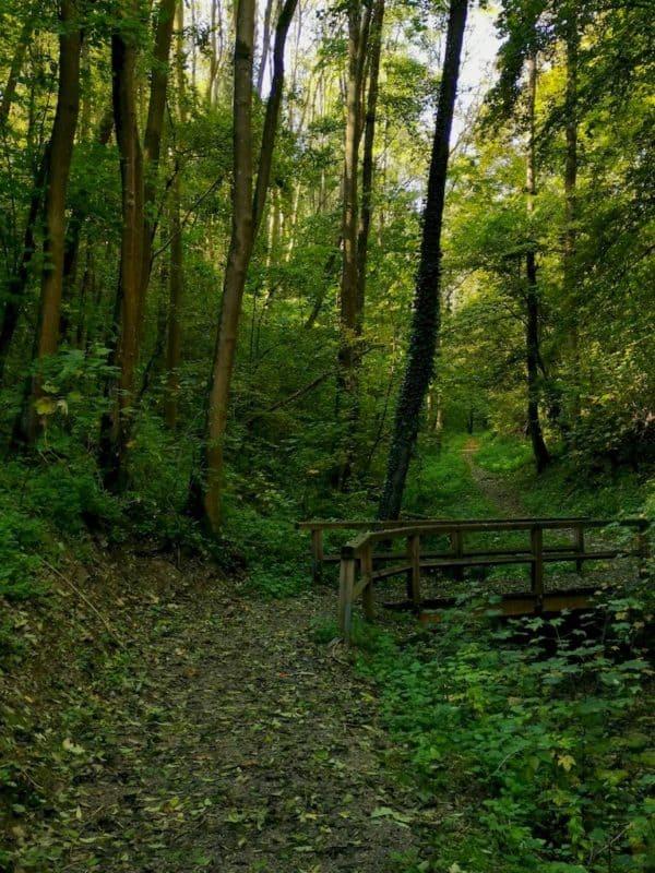 Über diese kleine Brücke geht es weiter in den Wald durch das schmale Blinktal