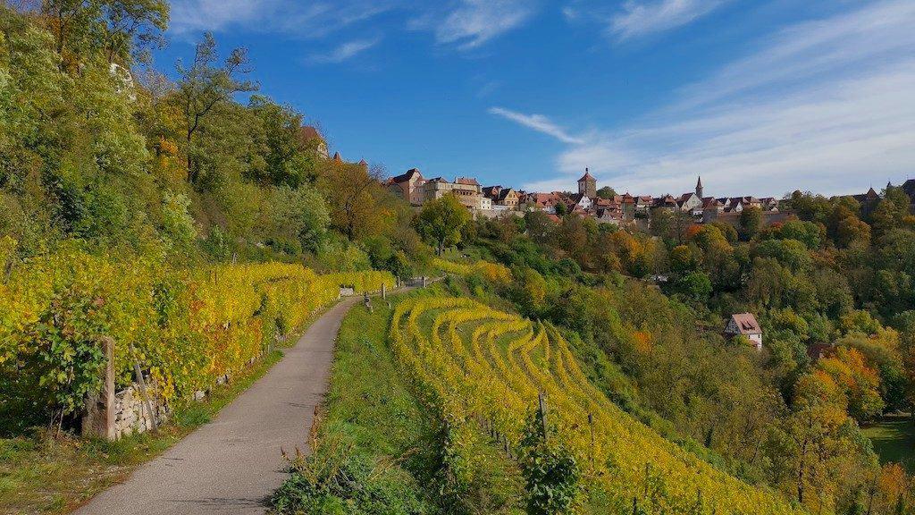 saftig leuchten die Weinstöcke im Weinberg der Thüraufs in Rothenburg ob der Tauber
