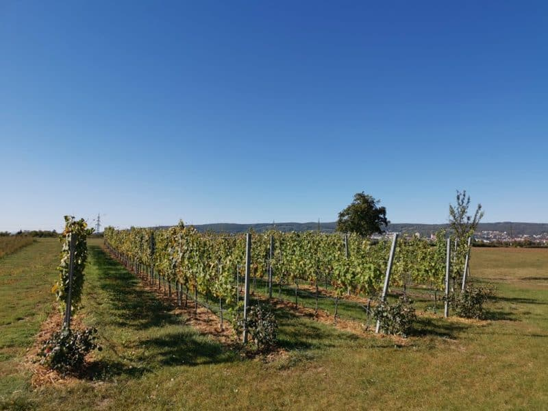 Bestes Kaiserwetter am Weingut Esterházy