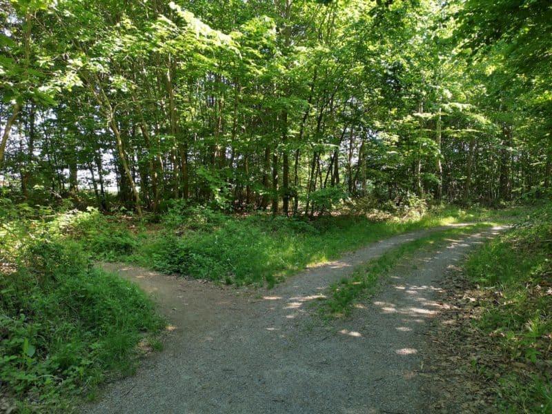 Abzweigung im Wald kurz vor Aichelberg