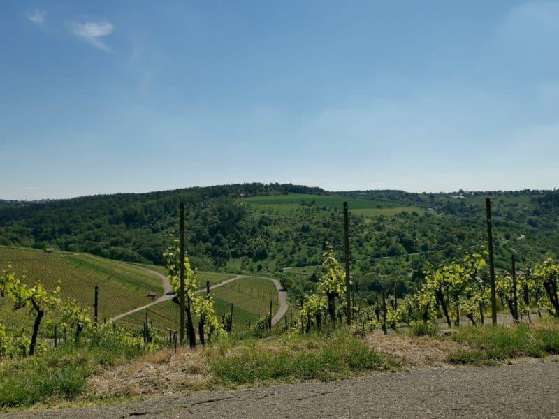 Der Ausblick über Weinberge und gegenüberliegenden Hügel von dieser Bank