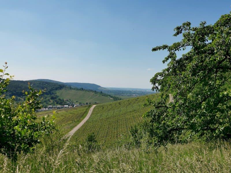 Herrliche Aussicht über die Weinberge durch zwei Bäume auf Strümpfelbach