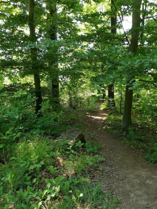 Weg links runter 20 m raus aus dem Wald
