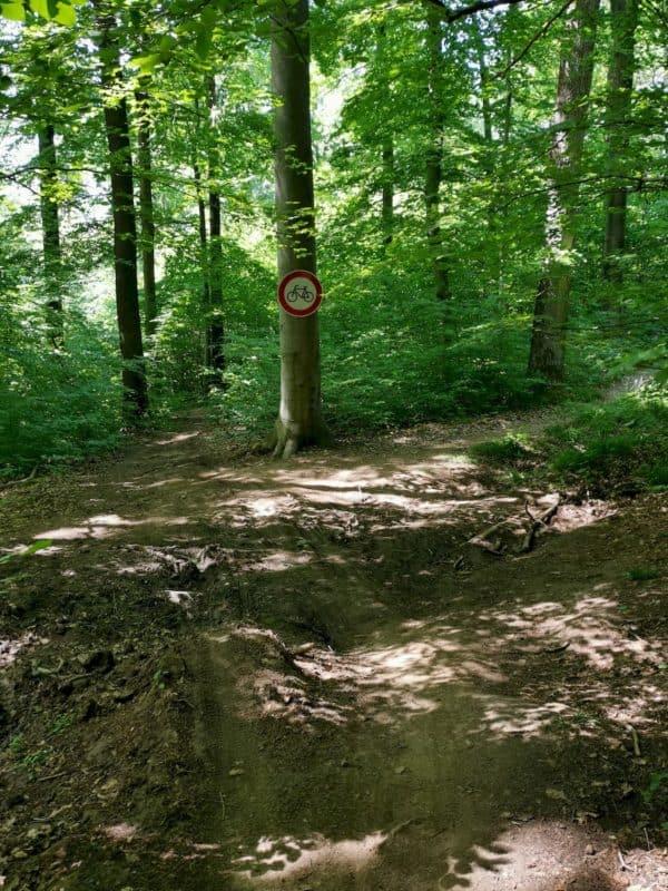 Schöner schmaler Pfad im Wald, gut zu gehen