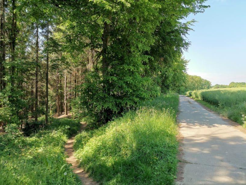 Der scharf abzweigende Pfad in den Wald - auf dem Weg rechts sind wir hergekommen