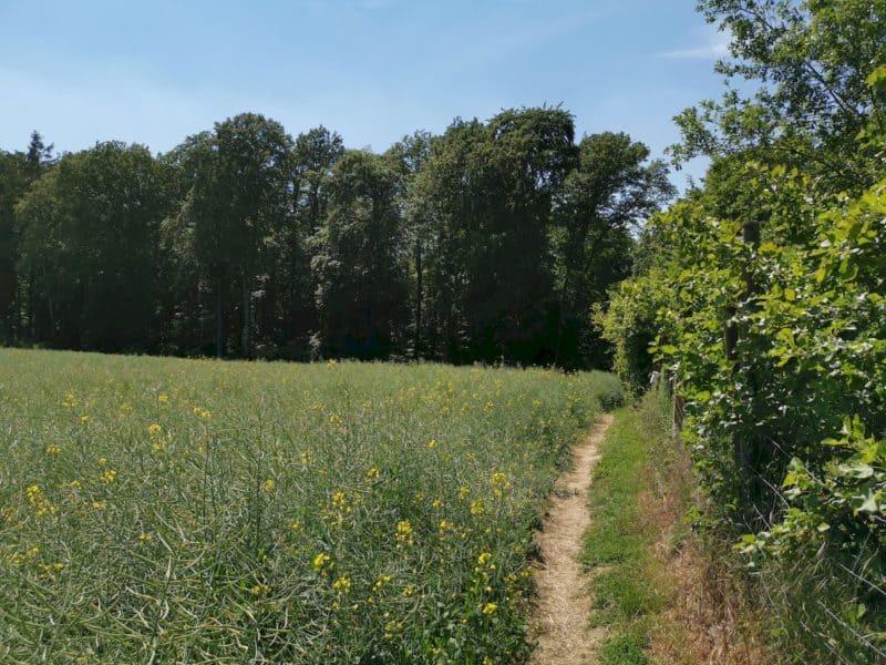 Vor dem Friedhofsparkplatz Aichelberg geht es rechts runter zum Waldrand