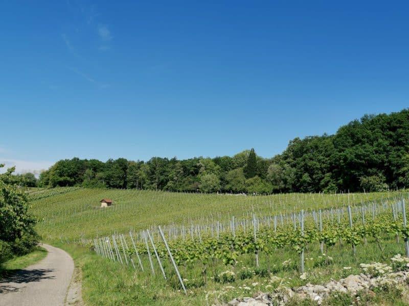 Blick in den Weinberg mit leicht zu erkennenden Grillplatz Karlstein oben etwa in der Mitte am Waldrand