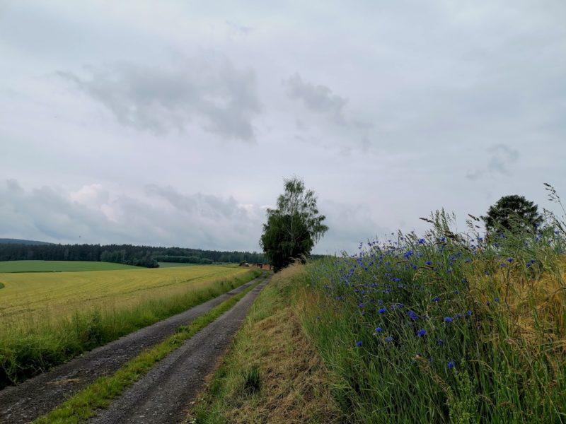 Gerade aus geht es hier auf dem Nurtschweg, die Freiheit des Wanderns genießen