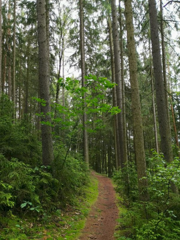 Ein Blick zurück auf den Nurtschweg - hier wunderschöner schmaler Pfad durch den Wald, etwa 2 km vor Bad Neualbenreuth