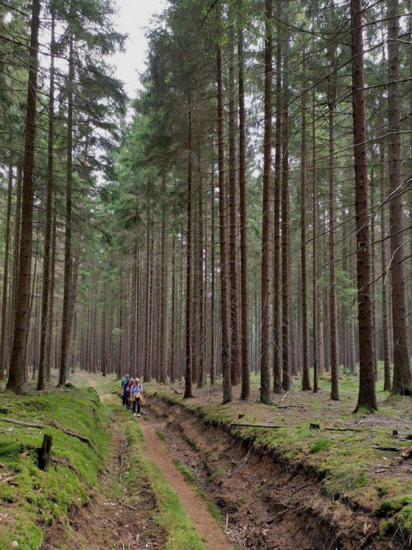 Immer schön durch den Wald geht der Weg
