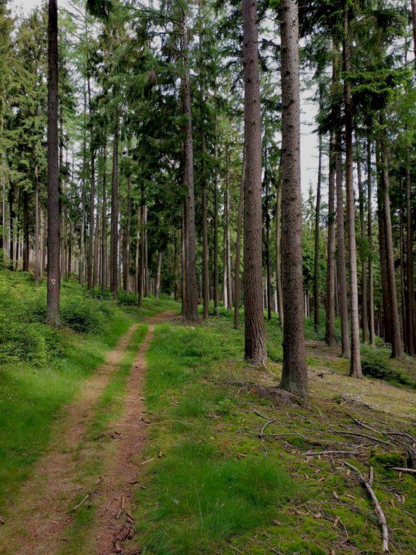 Schöner bequemer weicher Waldweg auf dem Rinnlstein-Rundweg