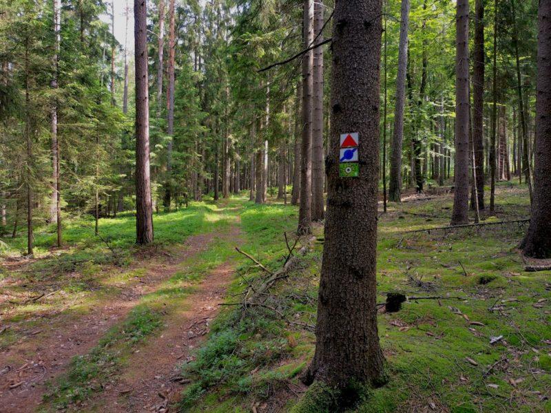 Das Wegzeichen des Rinnlstein-Rundwegs