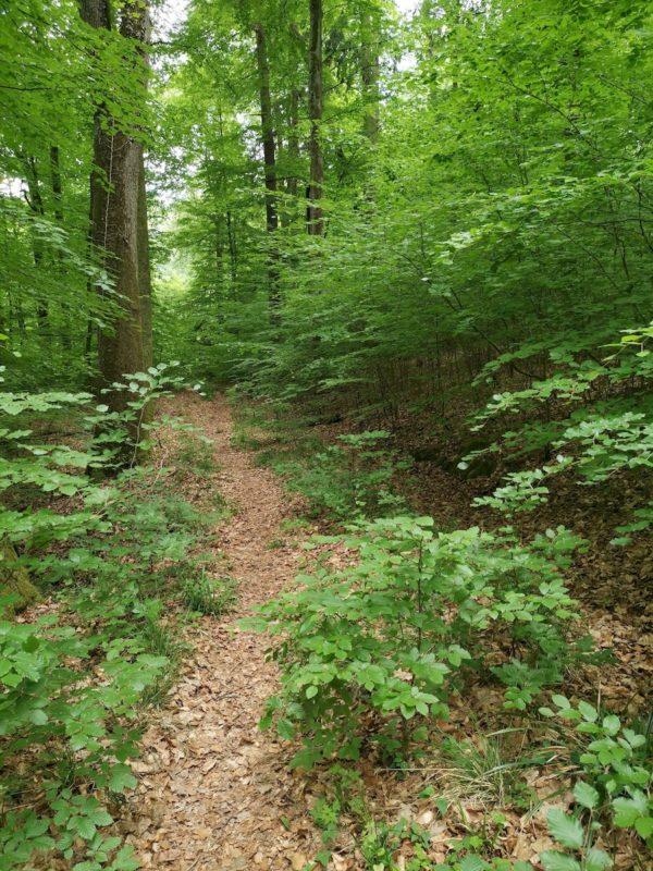 Herrlicher laubbedeckter Pfad durch den Wald