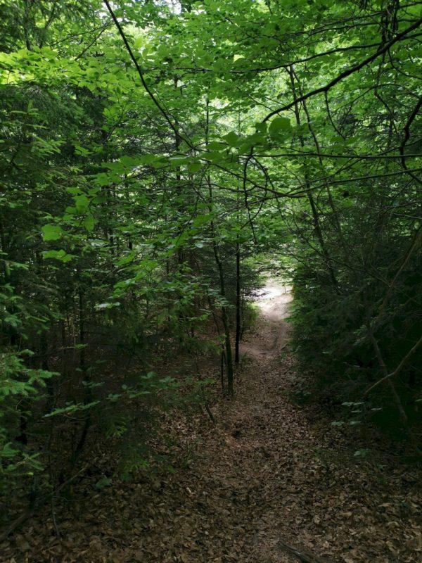 Manchmal wird es auch dunkler im Wald ;)
