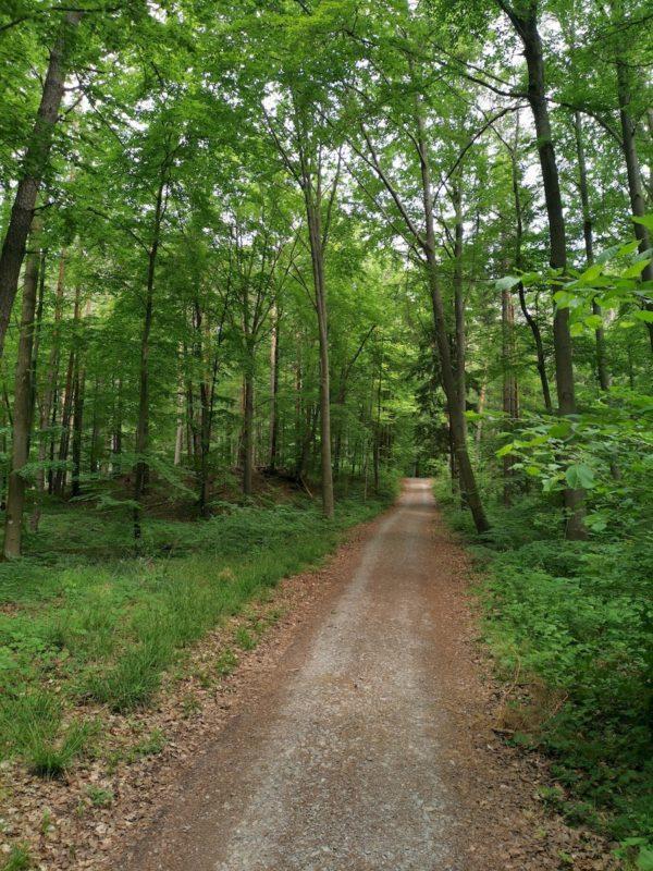 Schöner gemütlicher Waldweg