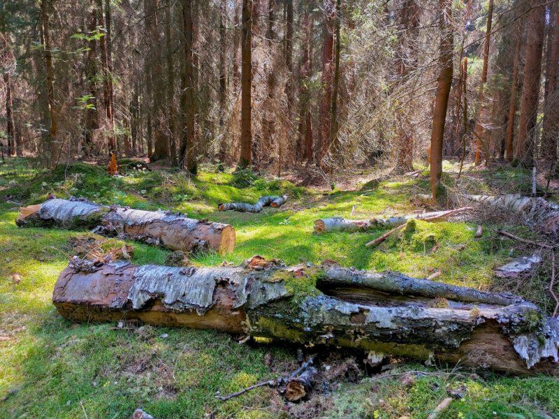 Immer wieder faszinierend im Wald