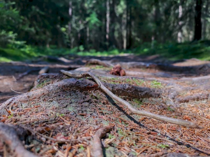 Über Stock und Stein geht der Wanderweg zurück nach Waldsassen