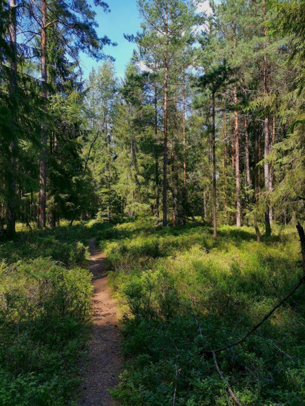 Schmaler Waldweg auf dem Rückweg nach Waldsassen