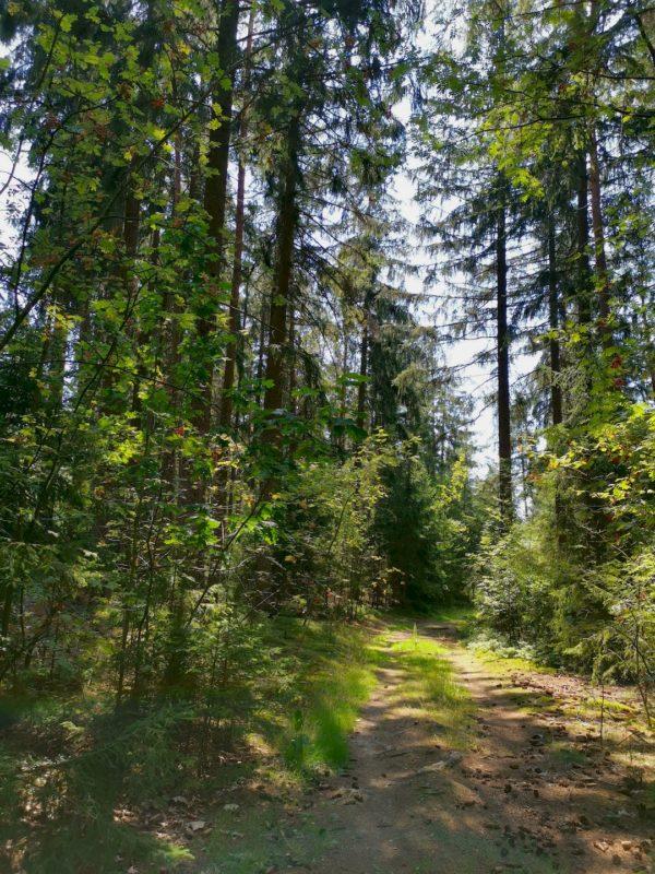 Angenehm wird es im Wald