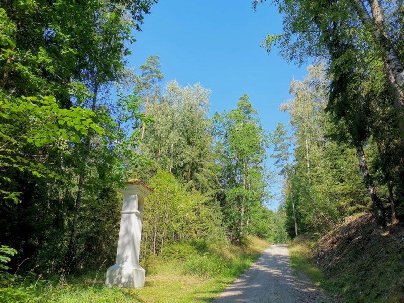 Ein gemütlicher breiter Waldweg, leicht aufwärts geht es, die Sonne im Rücken