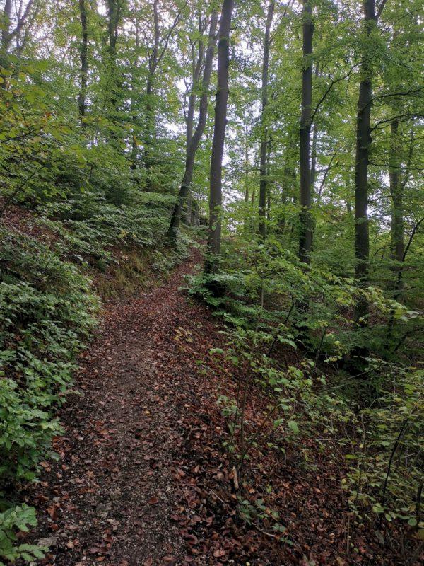 Schöner schmaler Pfad im Wald der zur Ruine Wartstein führt