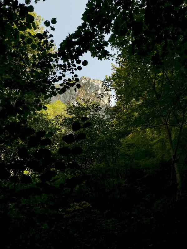 Massive Felsen schimmern durch die Bäume