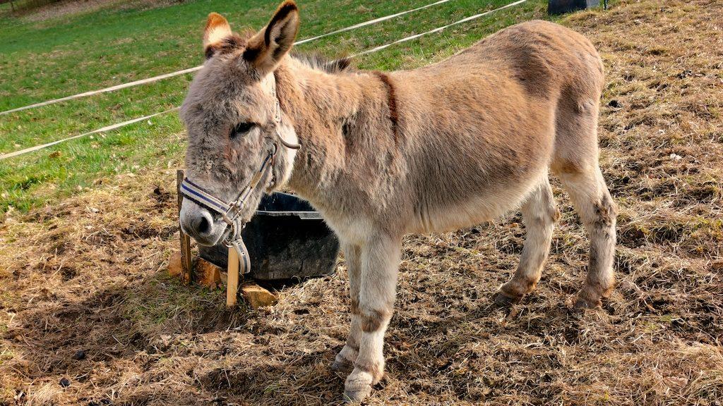 Was für herrlicher Esel! So knuffig!