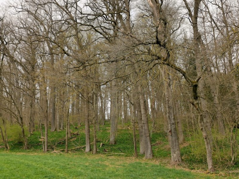 Sowohl das Grad als auch der Bärlauch sind saftig grün im Körschtal Anfang April