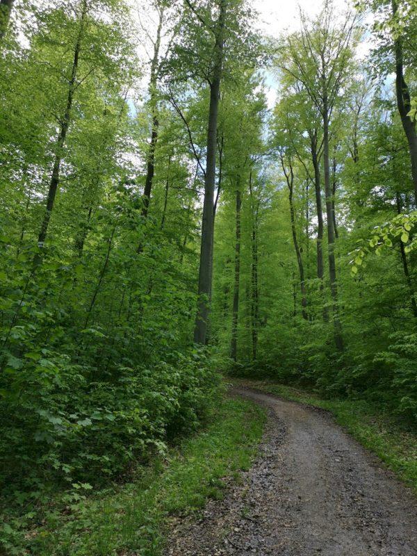 Es geht in den Wald, noch hält sich die Steigung in Grenzen