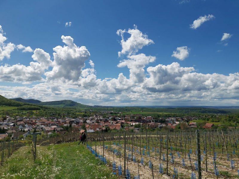 Weg quer durch den Weinanbau