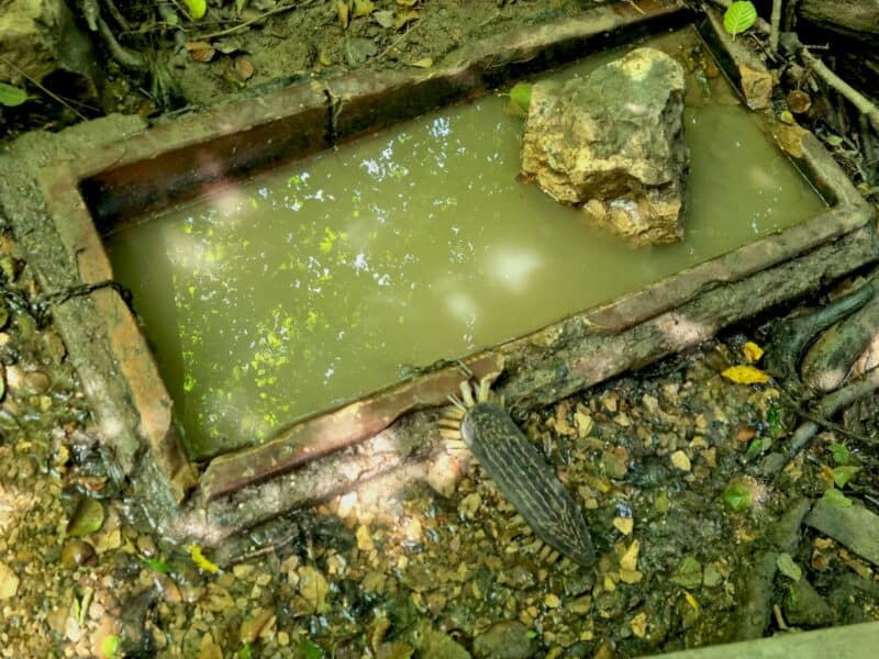 Schuhwaschanlage - nicht zu sehen: daneben fließt ein Bächlein, da hat es auch frisches sauberes Wasser