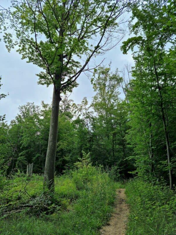 Der nächste schmale Pfad durch den Wald
