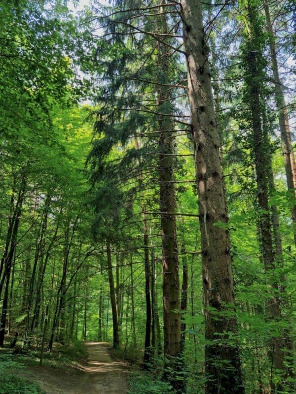 Ein weiterer schöner Weg durch den Wald