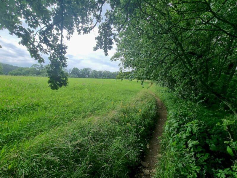 Am Waldrand geht es entlang