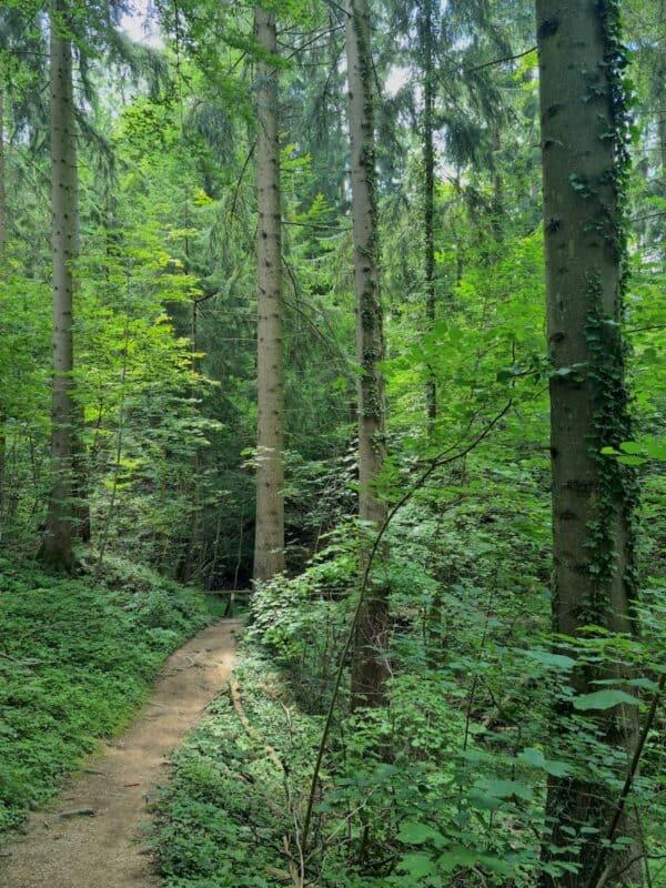 Ein Waldweg ganz nach meinem Geschmack