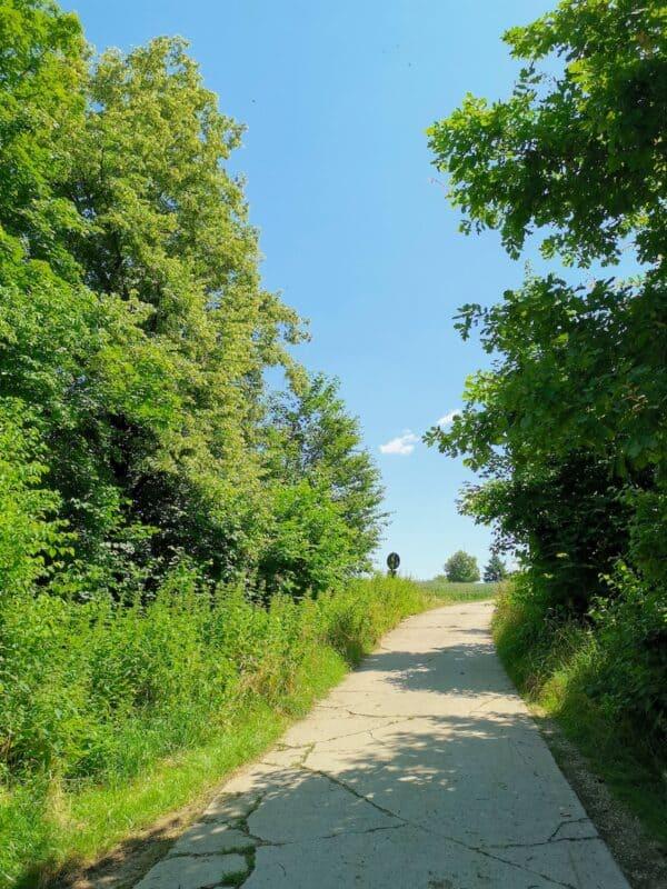 Auf Stein geht es weiter raus auf dem Bald und wenige Meter bis zur Alpakafarm Schaber