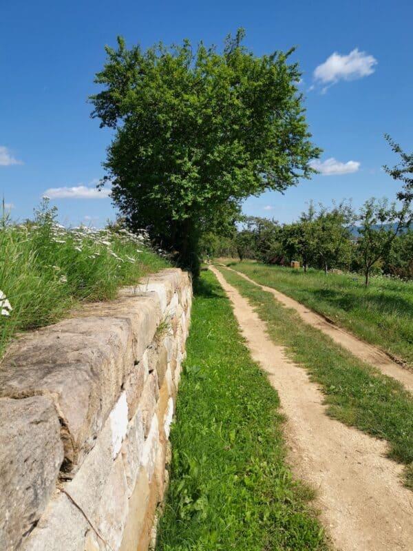 Die neueste der Trockenmauern am Wegesrand, die Eidechsen einen Sonnenplatz bieten soll