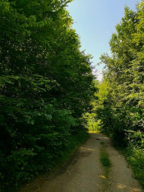 """Es geht in den Wald auf dem Qualitätswanderweg """"hochgehblickt"""" und wir freuen uns über noch etwas mehr Schatten"""