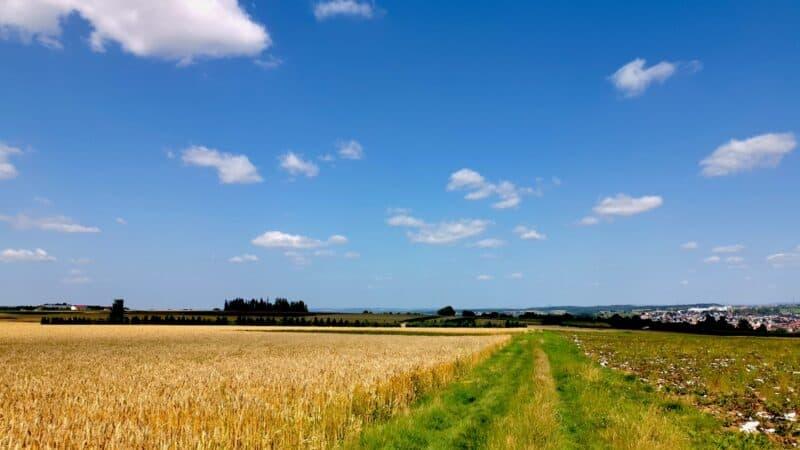 """Über diesen Wiesenweg am Weizenfeld führt der Wanderweg """"hochgeblickt"""" uns langsam zurück zum Start"""