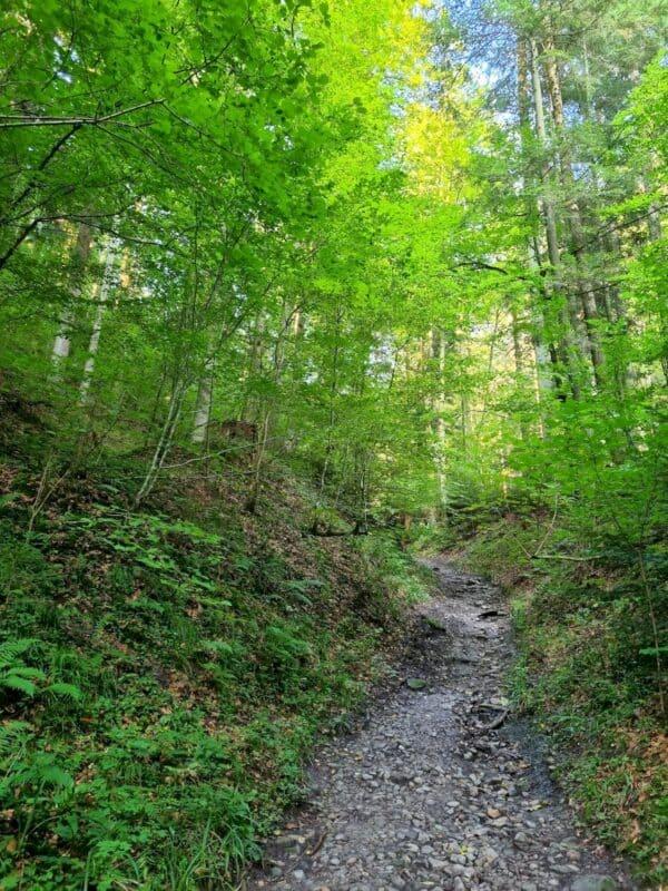Abwärts ins Strümpfelbachtal geht es auf einem schmalen Waldweg