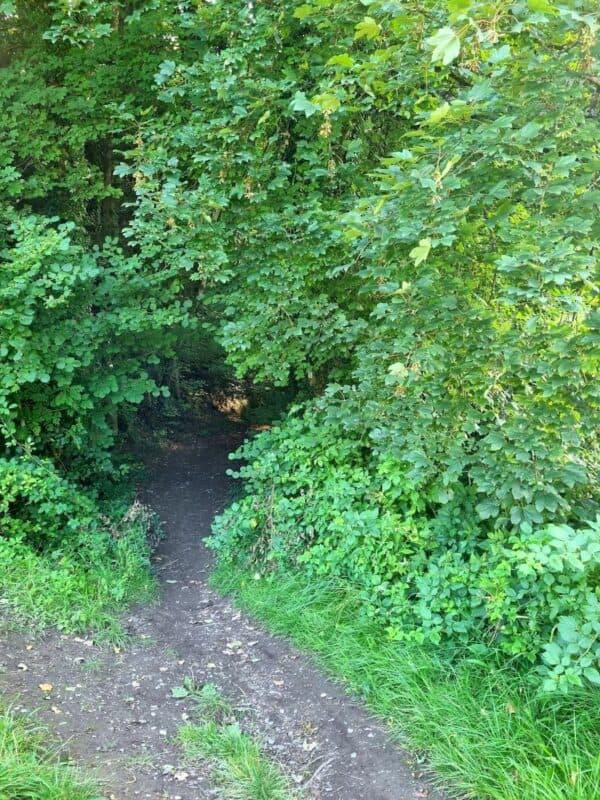 Und wieder geht es auf einen Wanderweg in den Wald