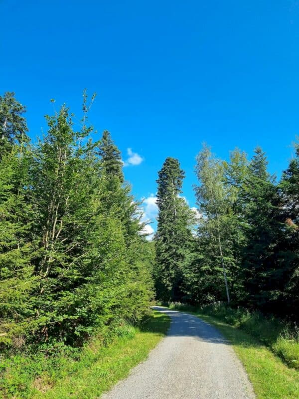 Ein wärmendes Stück mit blauem Himmel und breitem Waldweg