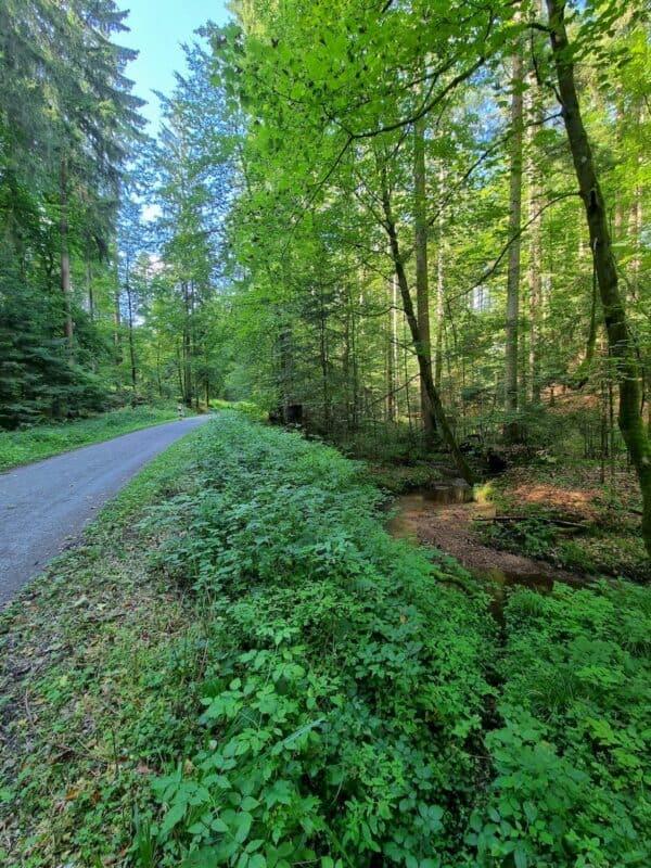 Der Steinbach plätschert vor sich hin, der Weg ist breit und gemütlich zu gehen