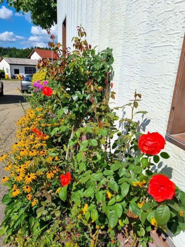 Blumen an einem Haus in Schöllhütte, kurz bevor wir auf die Ebniseestrasse abbiegen