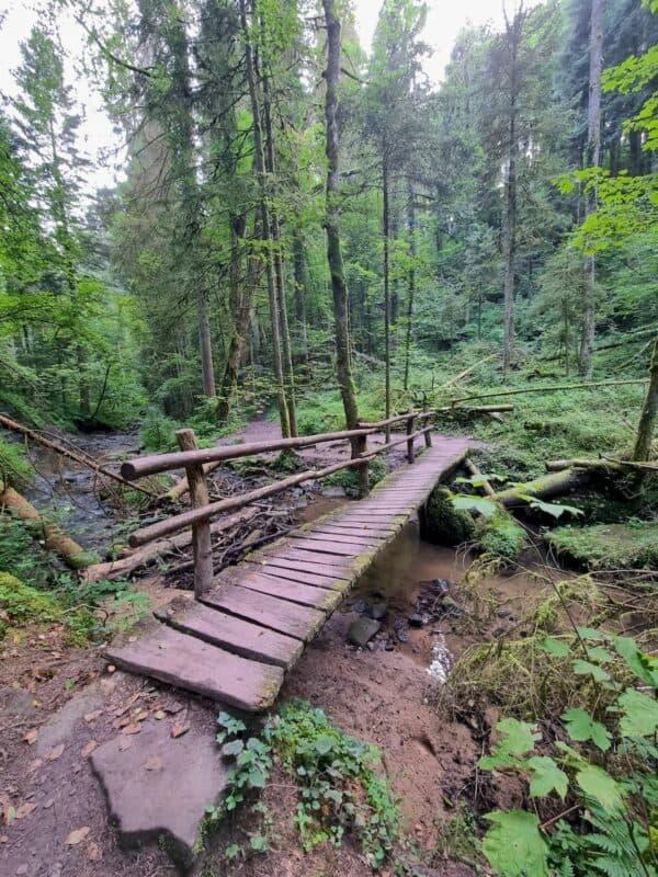 Brücken helfen beim Überqueren des Strümpfelbachs
