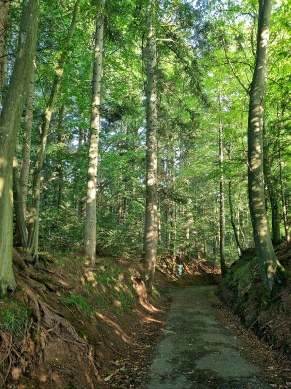 Auf einem schönen Hohlweg geht es kurz nach Voggenhof abwärts im Wald